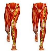 https://www.juliesinner.com/what-is-knee-valgus/